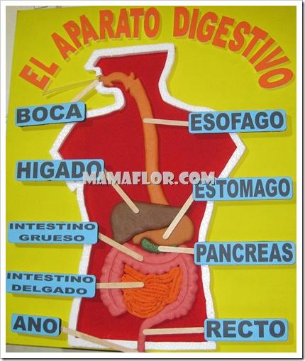 Resultado de imagen de aparato digestivo manualidad