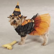 halloweeen dog