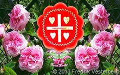 DSC07386 (1) Rosa rosor blommor. Med amorism logotyp röd blomma