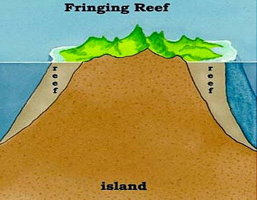 types of fuse box types of reefs diagram coral reefs-types-formation | biozoom #9