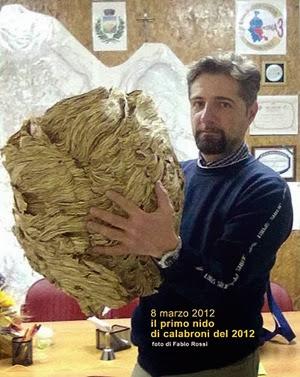 Nido di calabrone asiatico gigante scoperto in Italia (2012)