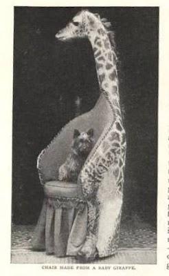baby giraffe chair.jpg