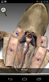 Froguts Frog Dissection Screenshot 6