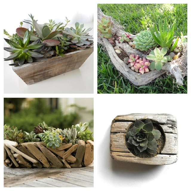 Succulent + Driftwood Centerpiece