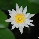 Тайланд 17.05.2012 7-54-10.JPG