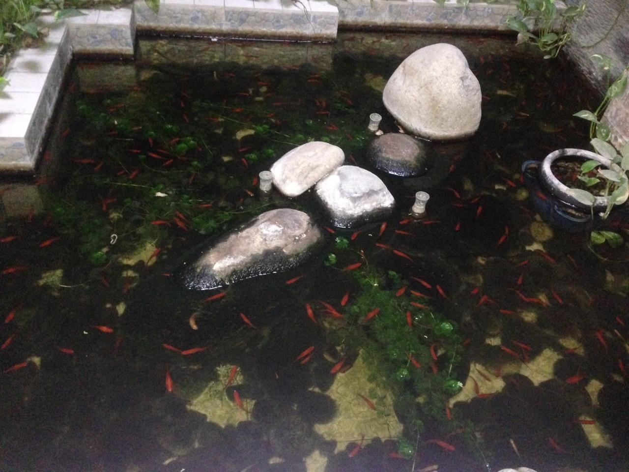 Biệt Thự mini ven sông Hiệp Bình Chánh Quận Thủ Đức 12