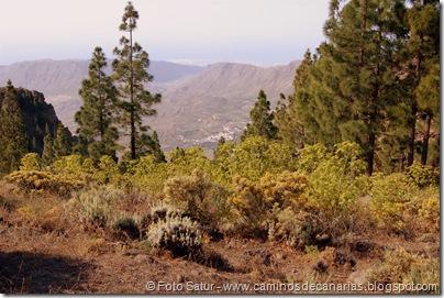 5795 Pico las Nieves-Temisas