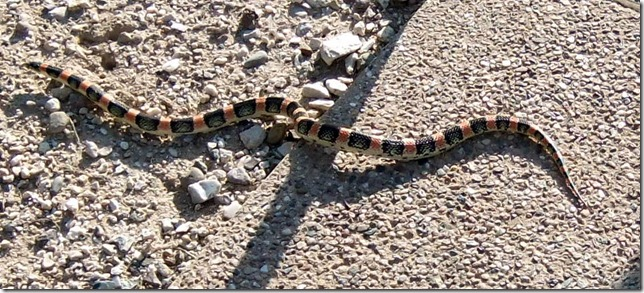 Longnosed snake shadow 8-13-2012 8-04-06 AM 1123x507