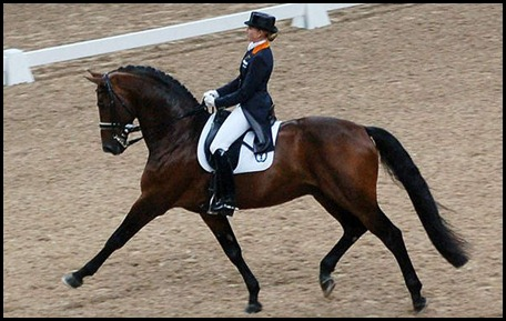 dressage-contact