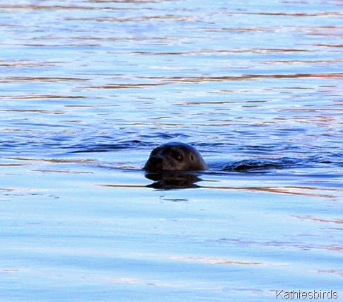 4. seal in Bath, ME-kab