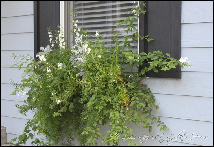 window box 5