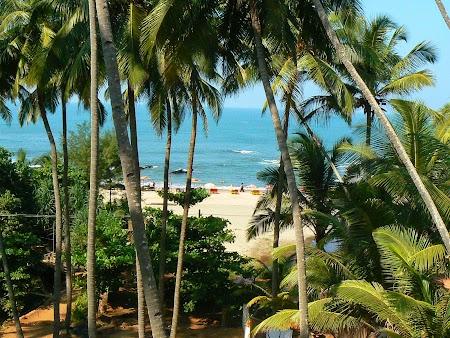50. Palmieri si plaja in Goa.JPG