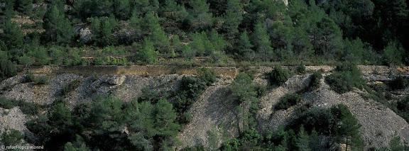 Marges de pedra secaBarranc de les GanyesMargalef, Priorat, Tarragona2003.03