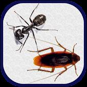 New Smash Ants 2015