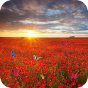 Sea Of Flowers icon