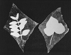 photogram leaves