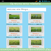 BRRI Rice Varieties Bangladesh