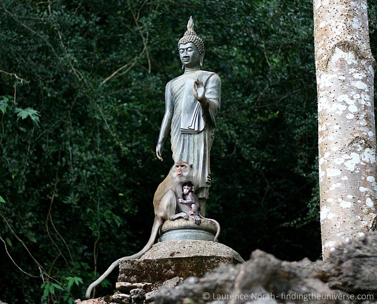 Monkey, baby and buddha statue in Khao Sok National Park Thailand