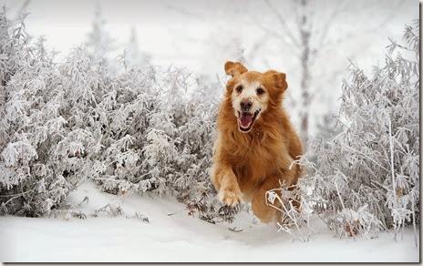 poze iarna-catel