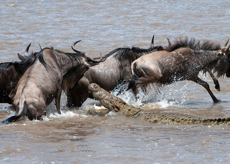 mara_river_crossing