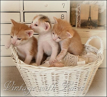 3 in a basket