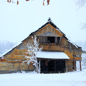 The Old Fish Barn by Ty Shults - Buildings & Architecture Decaying & Abandoned ( winter, barn, shack, snow, rural, abandoned )