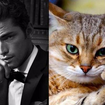 Những chú mèo tạo dáng trước ống kính cũng không hề thua