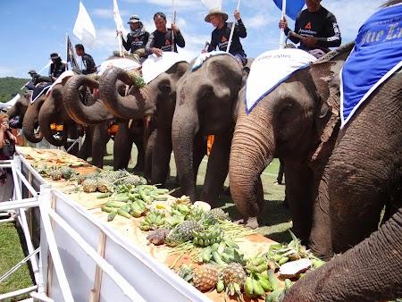 26. Mancare pentru elefanti.JPG