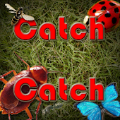 CatchCatch (kill the bugs)