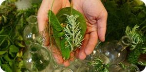 Le erbe della salute e del benessere.