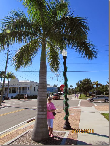 Beautiful Palm Tree in Punta Gorda