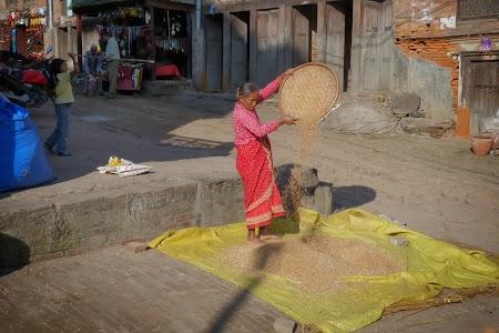 Nepaleza treierand orezul