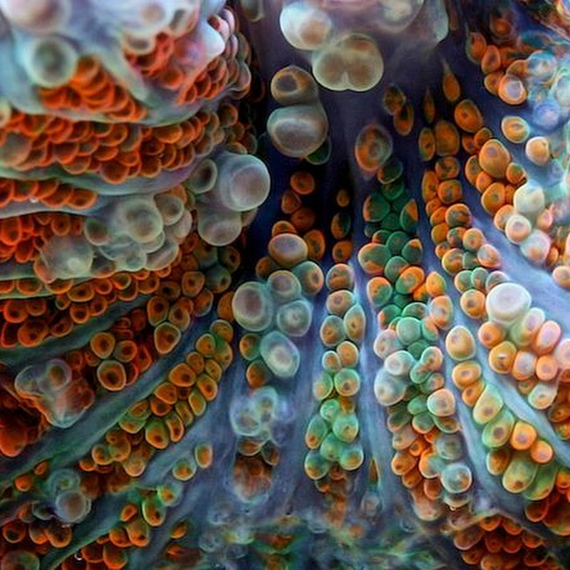 Close-Up Pictures of Corals by Felix Salazar
