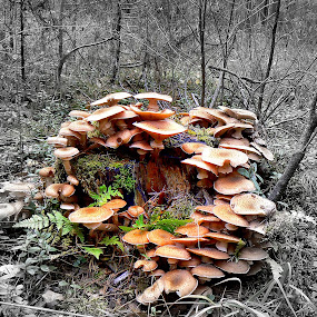 mushrooms by Vygintas Domanskis - Nature Up Close Mushrooms & Fungi ( , mushroom, nature, natural )