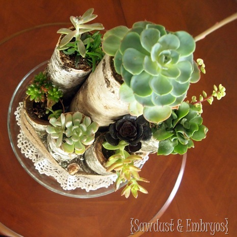 Succulent Centerpiece using Birch Logs {Sawdust and Embryos}