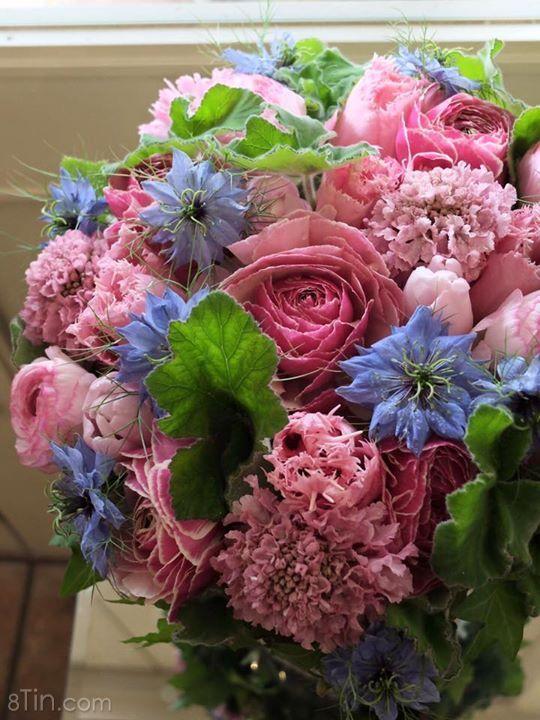 Hoa Nhật đẹp quá ... Hồi hộp chờ đợi hoa về thôi