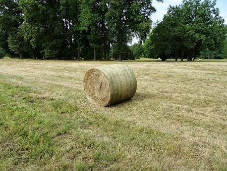 . Agricultura la Potsdam