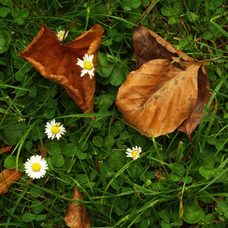 leaves and daisys