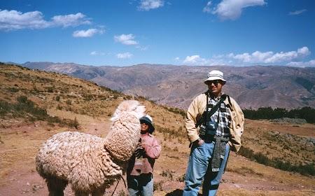 15. Lama in Peru.jpg
