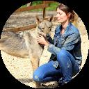 Image Google de L'Agence tous chiens