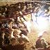 Kỹ thuật nuôi gà ta thuần chủng