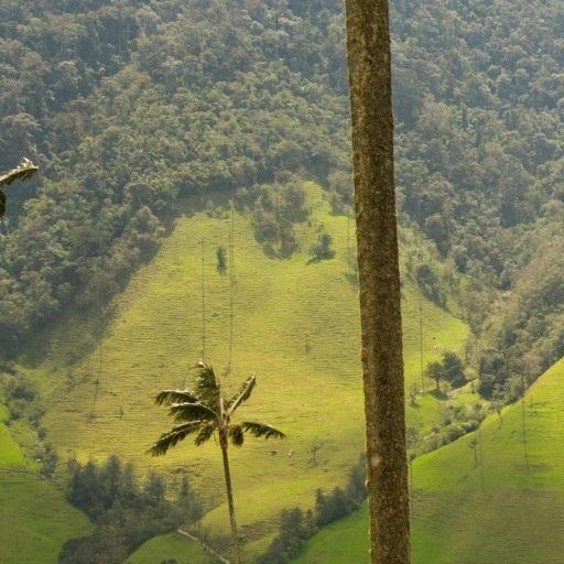 Colombia, Dichos y Refranes. LOGO-APP點子