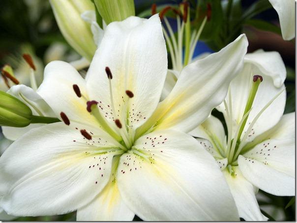 flor día del amor (44)
