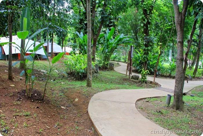 chok chai farm camp (6)