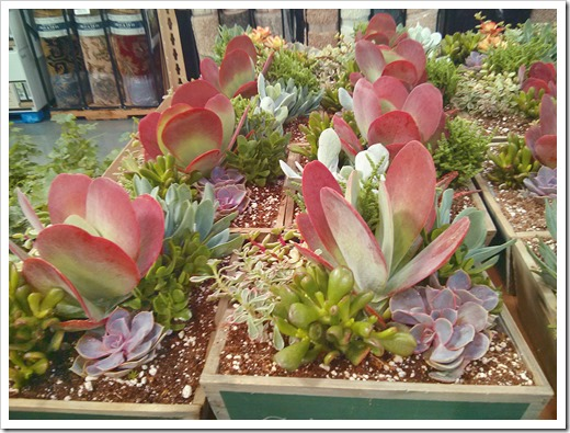 130612_SucculentGarden_Costco_05
