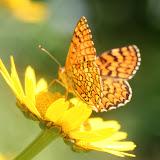 flor-silvestre_borboleta1.jpg