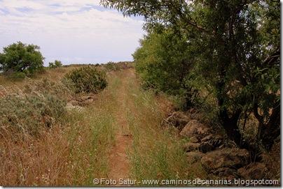 5829 Pico las Nieves-Temisas