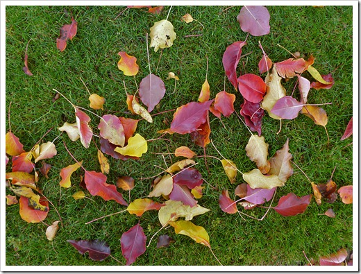 111121_leaves_on_lawn