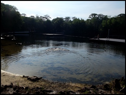 Monday at Wakulla Springs 122