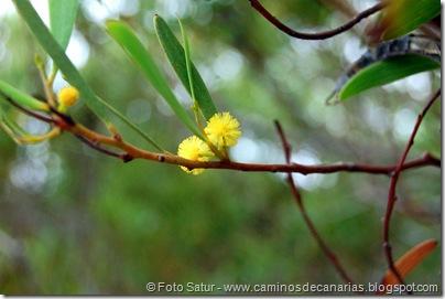 6519 Montaña de Amagro(Mimosa)